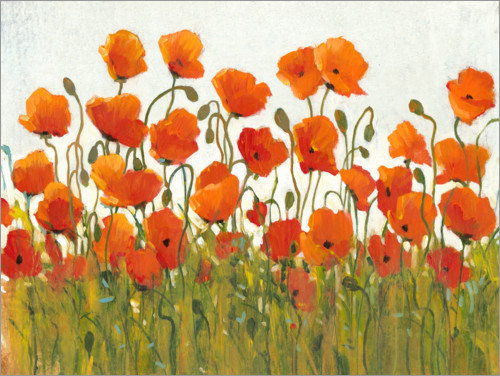 Juliste Rows of Poppies I