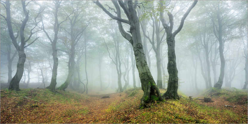 Juliste Mysterious forest in the fog