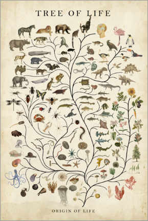 Canvas-taulu  Tree of Life - Studio W