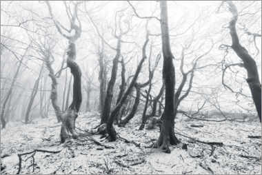 Canvas-taulu  Mystical forest in the snow and fog - The Wandering Soul
