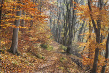 Canvas-taulu  Forest path in late autumn - The Wandering Soul