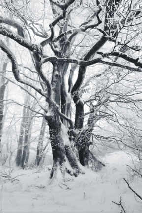 Canvas-taulu  Mystic tree in frost and snow - The Wandering Soul