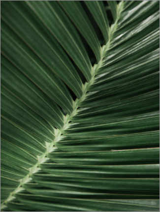 Galleriataulu  Palm leaf I - Magda Izzard