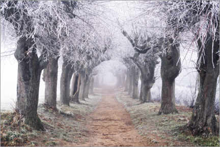 Puutaulu  Linden avenue in the fog and hoarfrost - The Wandering Soul