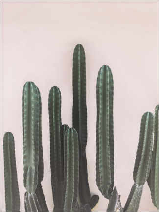 Canvas-taulu  Mexican cactus - Sisi And Seb