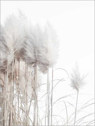 Canvas-taulu  Pampas grass II - Magda Izzard