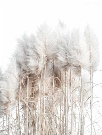 Juliste  Pampas grass I - Magda Izzard