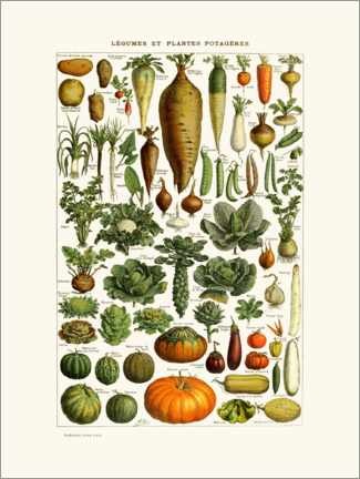 Akryylilasitaulu  Antique vegetable plate in French - Patruschka