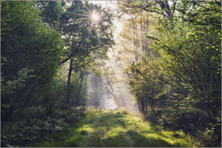 Galleriataulu  Forest path with rays of light at sunrise - The Wandering Soul