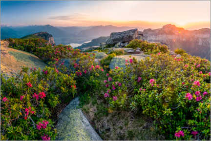 Akryylilasitaulu  Sunset in the Bernese Alps with alpine roses - Marcel Gross