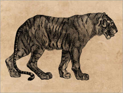 Canvas-taulu  The Tiger - Wunderkammer Collection
