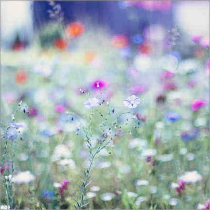 Alumiinitaulu  Colorful flower meadow in summer - Nadja Jacke