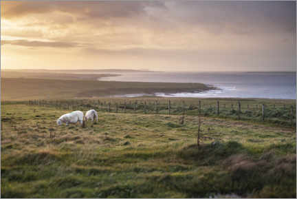 Canvas-taulu  Sheeps by the sea at sunset in Scotland - The Wandering Soul