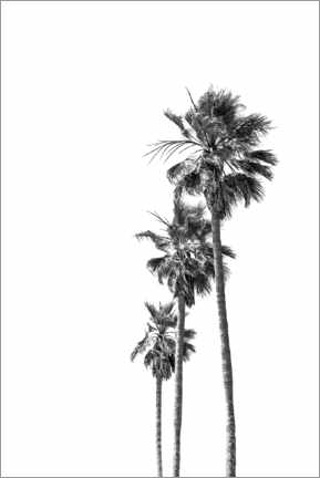 Juliste Black and white palm trees
