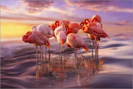Juliste  Flamingo siesta - Adrian Borda