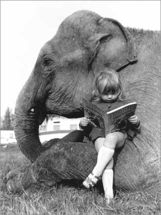 Juliste  Girl sits on elephant and reads - John Drysdale