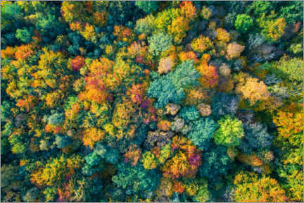Juliste Autumn from above