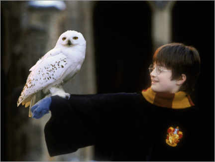 Juliste  Harry Potter and the Sorcerer's Stone - Harry & Hedwig