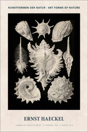 Canvas-taulu  Ernst Haeckel - Art forms of nature II - Museum Art Edition