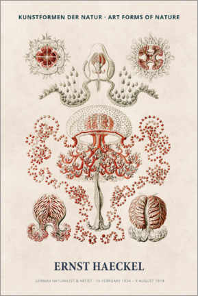 PVC-taulu  Ernst Haeckel - Art forms of nature I - Museum Art Edition