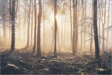 Juliste Morning light incidence in frost and fog in the beech forest