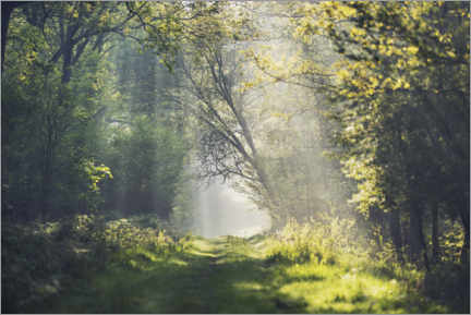Sisustustarra  Fantastic forest path in the morning light - The Wandering Soul