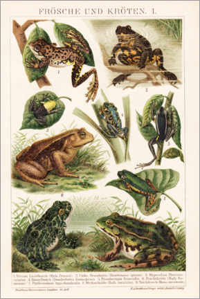Canvas-taulu  Frogs and toads