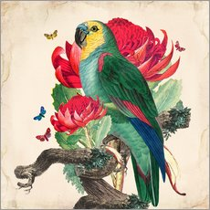 Galleriataulu  Oh My Parrot X - Mandy Reinmuth