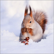 Galleriataulu  Squirrel in the snow