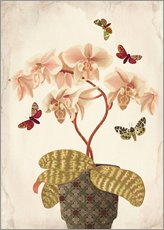 Galleriataulu  Orchid Portrait - Mandy Reinmuth
