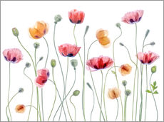 Sisustustarra  Poppy party - Mandy Disher