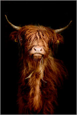 Akryylilasitaulu  Scottish highland cattle - Art Couture