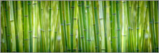 Canvas-taulu  Green bamboo - Art Couture