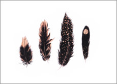 Juliste Ink and rose gold feathers