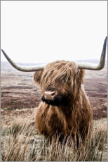 Juliste  Brown highland cattle - Art Couture