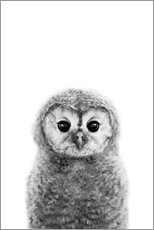 Canvas-taulu  Young owl - Art Couture