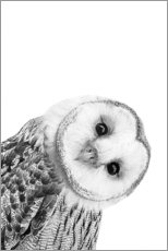 Canvas-taulu  Snow owl - Art Couture