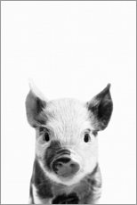 Juliste  Young piglet - Art Couture