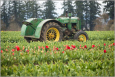 Canvas-taulu  Tractor on a tulip field