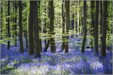 Sisustustarra  Blue sea of flowers in the forest with light - The Wandering Soul
