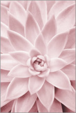 Canvas-taulu  Pink succulent plant - Sisi And Seb
