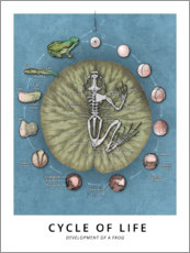Canvas-taulu  Cycle of life - Wunderkammer Collection