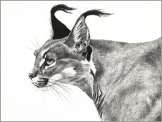 Juliste Caracal in the wind
