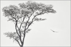 Juliste Lonely tree and eagle