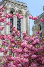 Juliste Cherry blossoms in front of Notre Dame