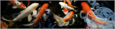 Canvas-taulu  Koi fish in the pond