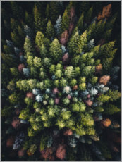 PVC-taulu  Colorful conifers from above - Lukas Saalfrank