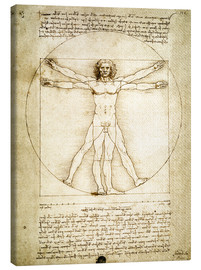 Canvas-taulu  The Proportions of the human figure - Leonardo da Vinci
