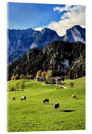 Akryylilasitaulu  Alps and pasture cows - Ric Ergenbright