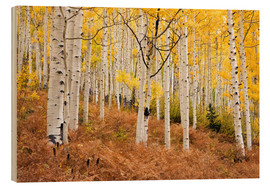 Puutaulu  Aspen forest and ferns in autumn - Don Grall